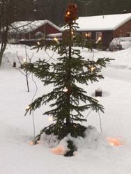 Kandidat 1. Ful julgran i Åkullsjön. Foto fredrik Lindgren