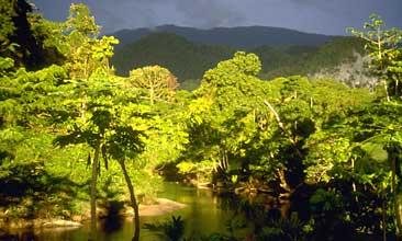 Regnskog som står inför skövling. Foto: Scanpix.