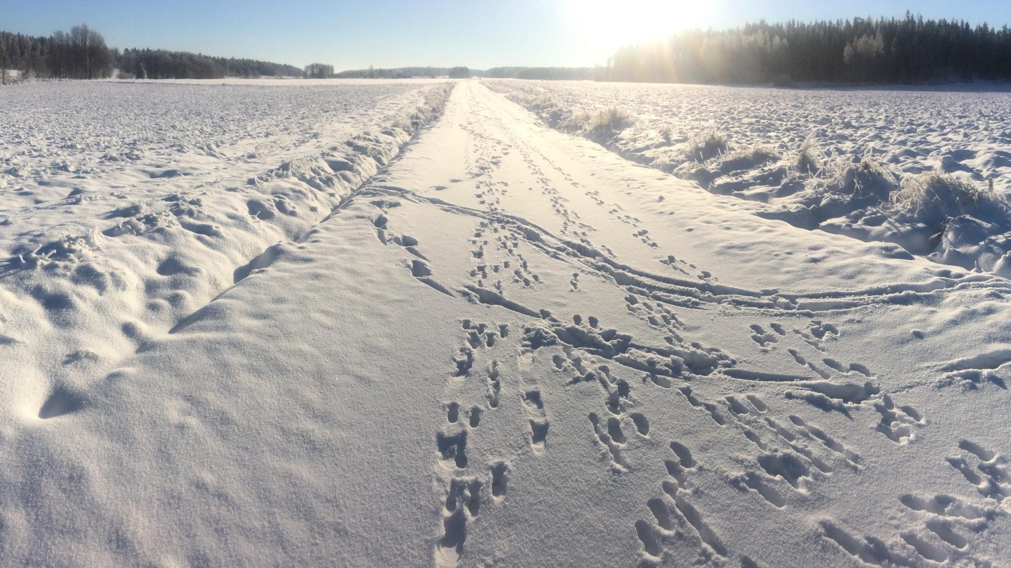 Spår i snö och sten