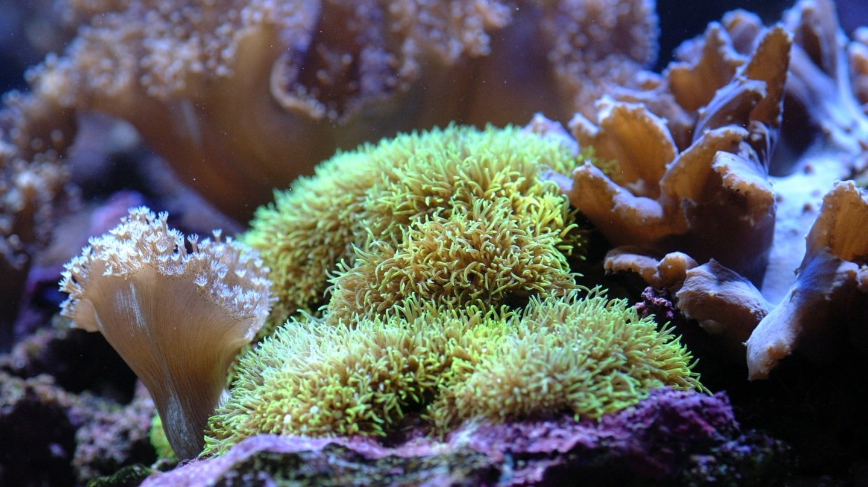 Bleka korallrev och växters svenska namn