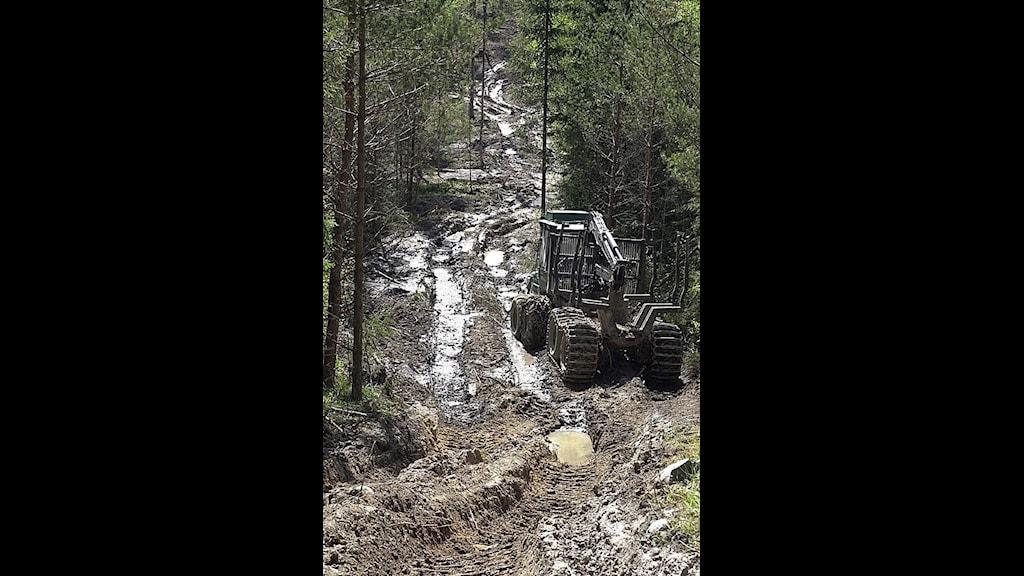 skogsmaskin med djupa spår