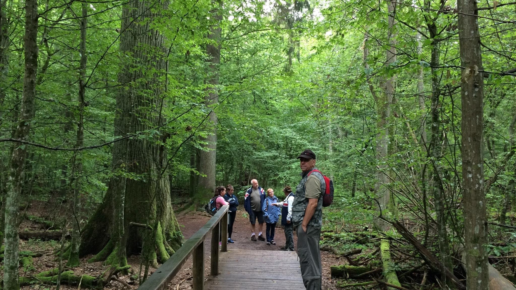 Trädens roll - i staden och i den unika Bialowiezaskogen