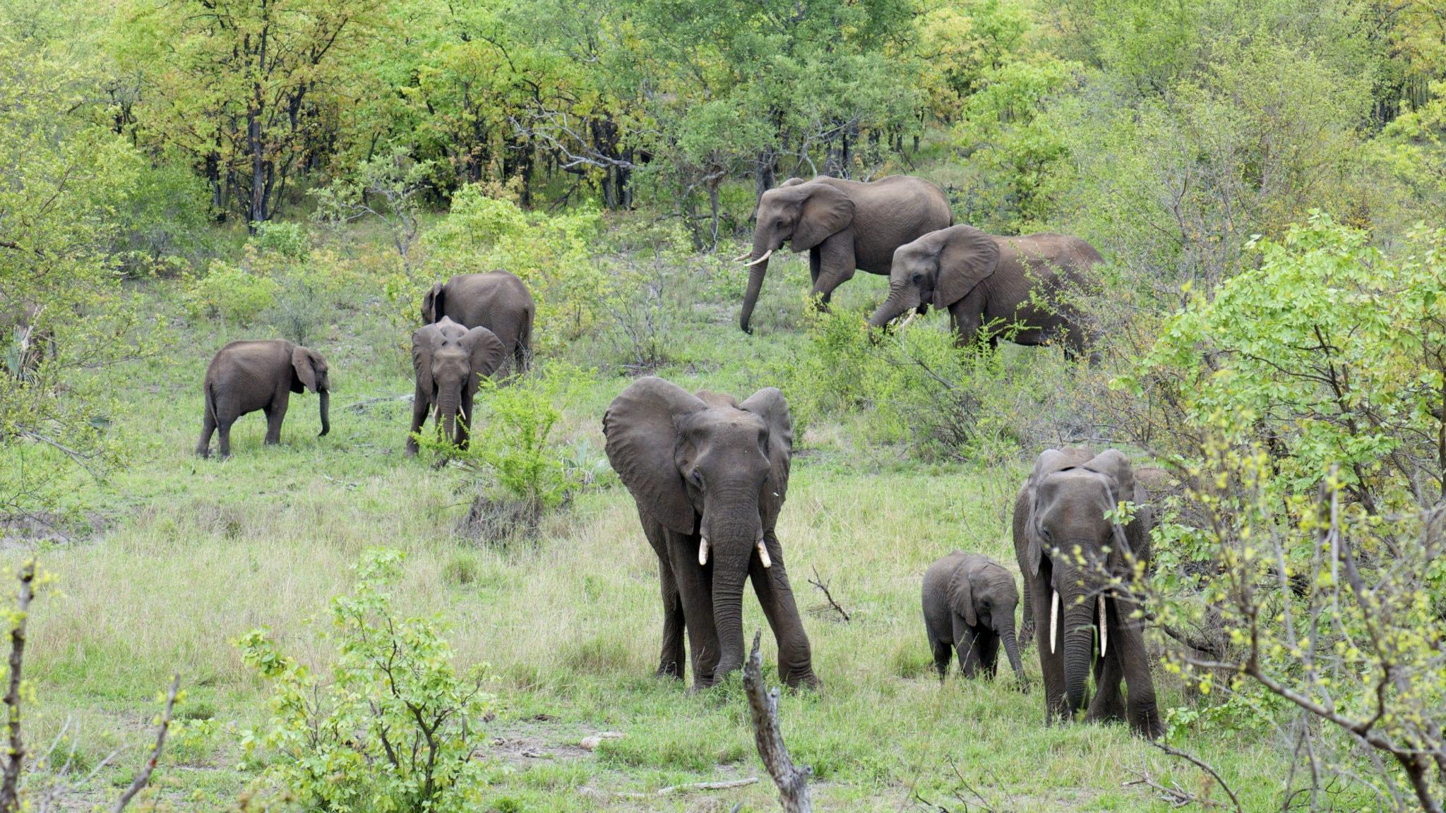 Gnagarkoll och möte med eftertraktade elefanter
