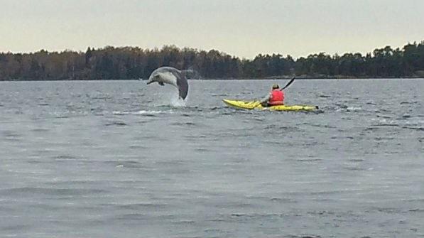 Delfinerna i Östersjön och biologerna på kyrkogården