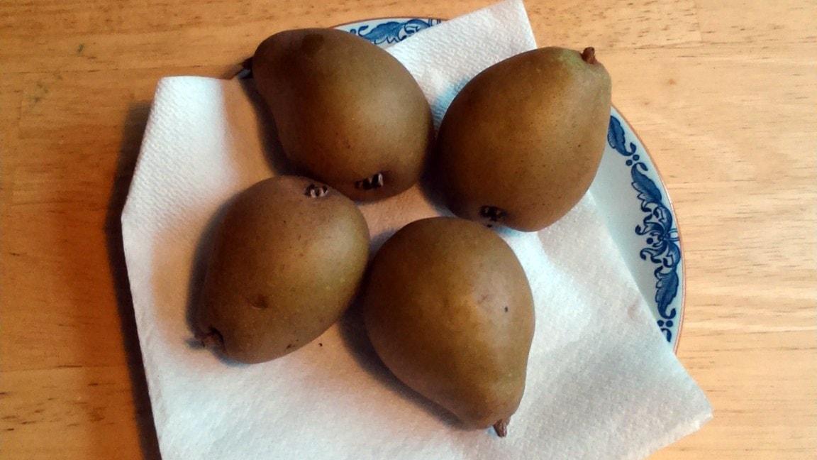 Naturpanelen om päron, björnar och hårvirvlar