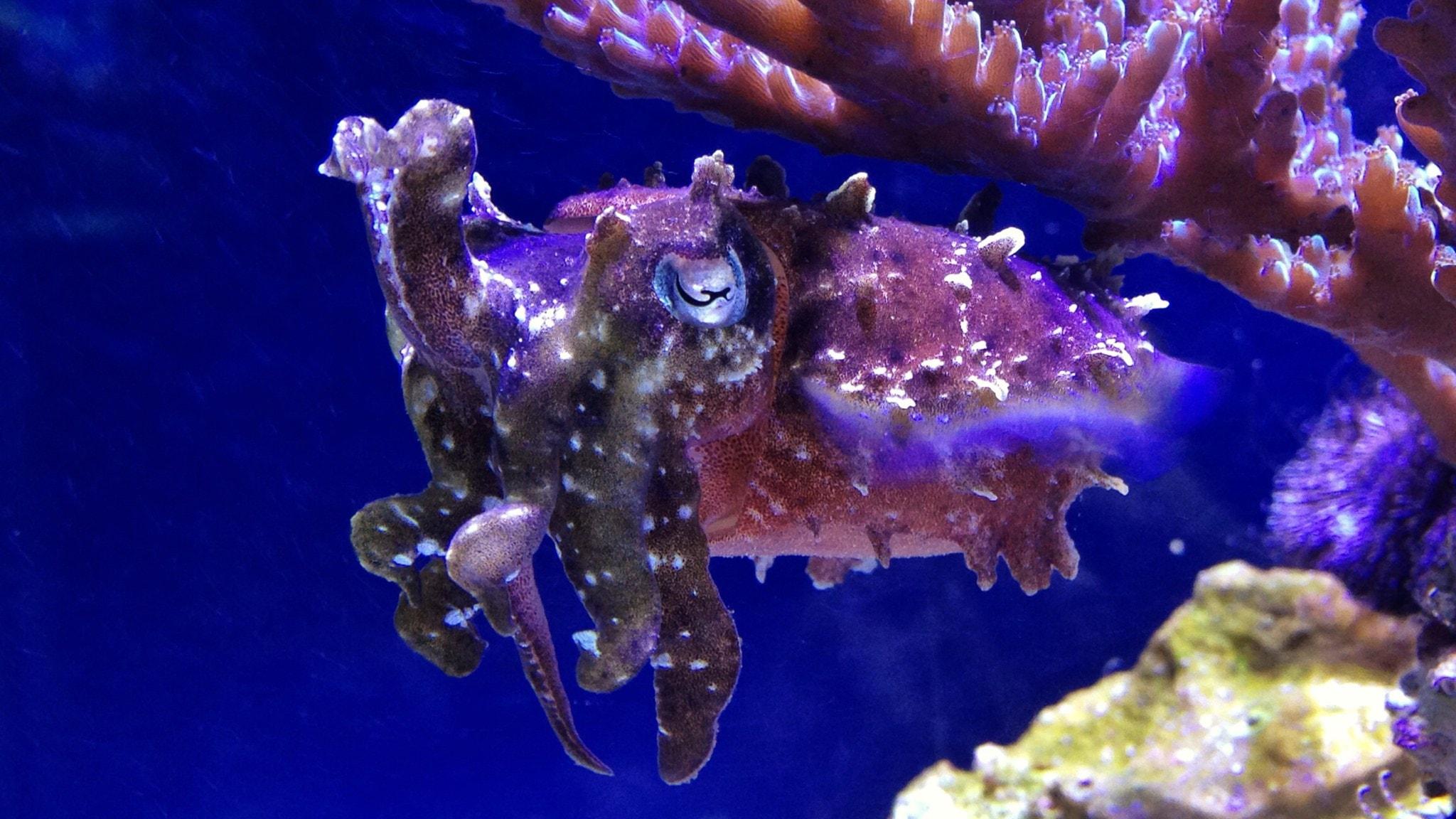 Smarta bläckfiskar och en lång färd på isen