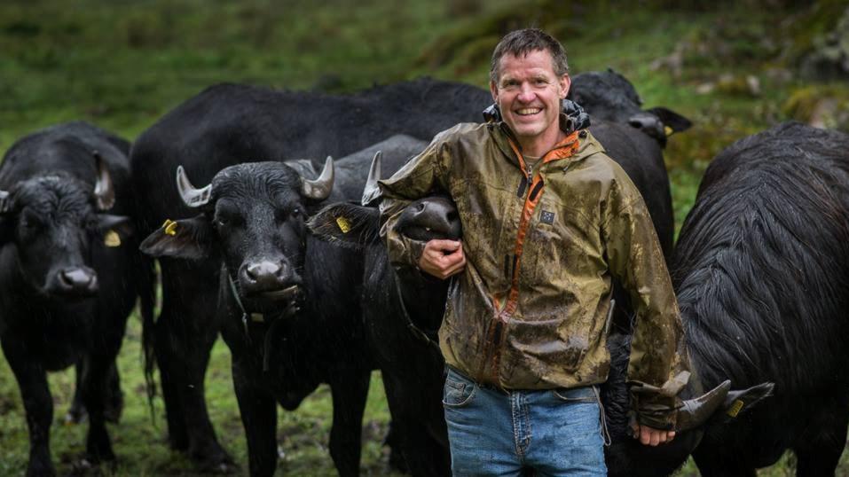 Vattenbufflar ger nytt liv åt fågelsjö i Uppland – och vi går i Rolf Lidbergs fotspår