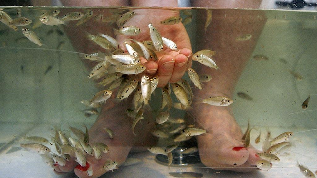 fisk spa stockholm buttplug