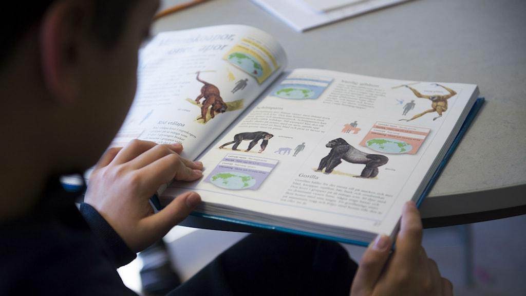En elev läser i en skolbok om apor.