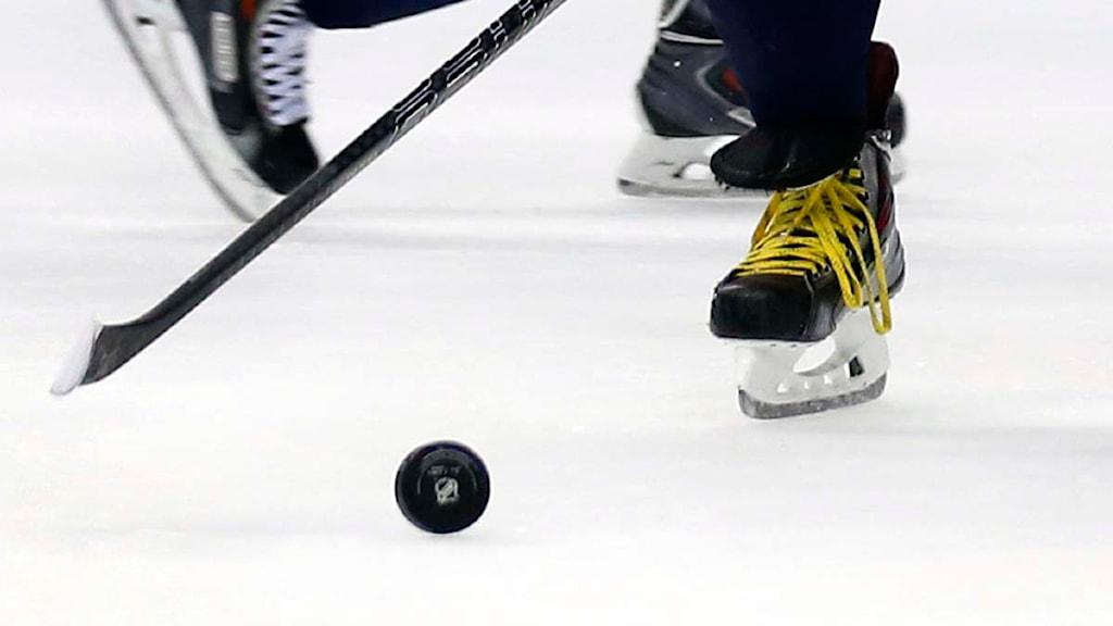 Närbild på en ishockeyspelare som åker med en puck framföra sig. Foto: Alex Brandon/TT.
