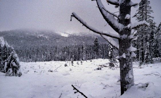 Den magiska julen i Kassa by av Bengt Pohjanen