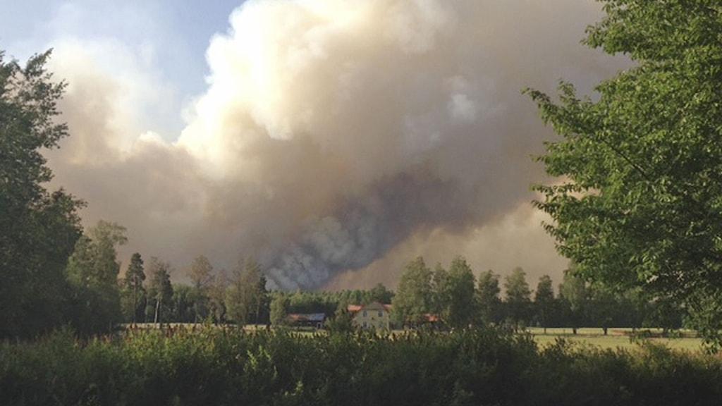 Himlen färgades svart av röken när en skogsbrand härjade utanför Rörbo söder om Sala i Västmanland. Foto: Linda Bergendahl/TT.