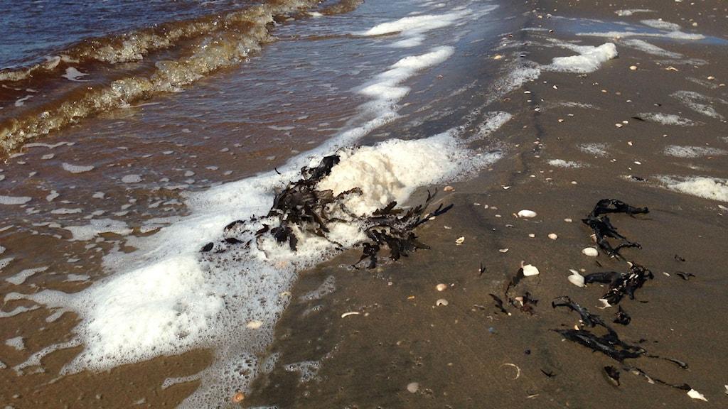 Skum på västra stranden i Halmstad. Foto: Jennifer Erlandsson