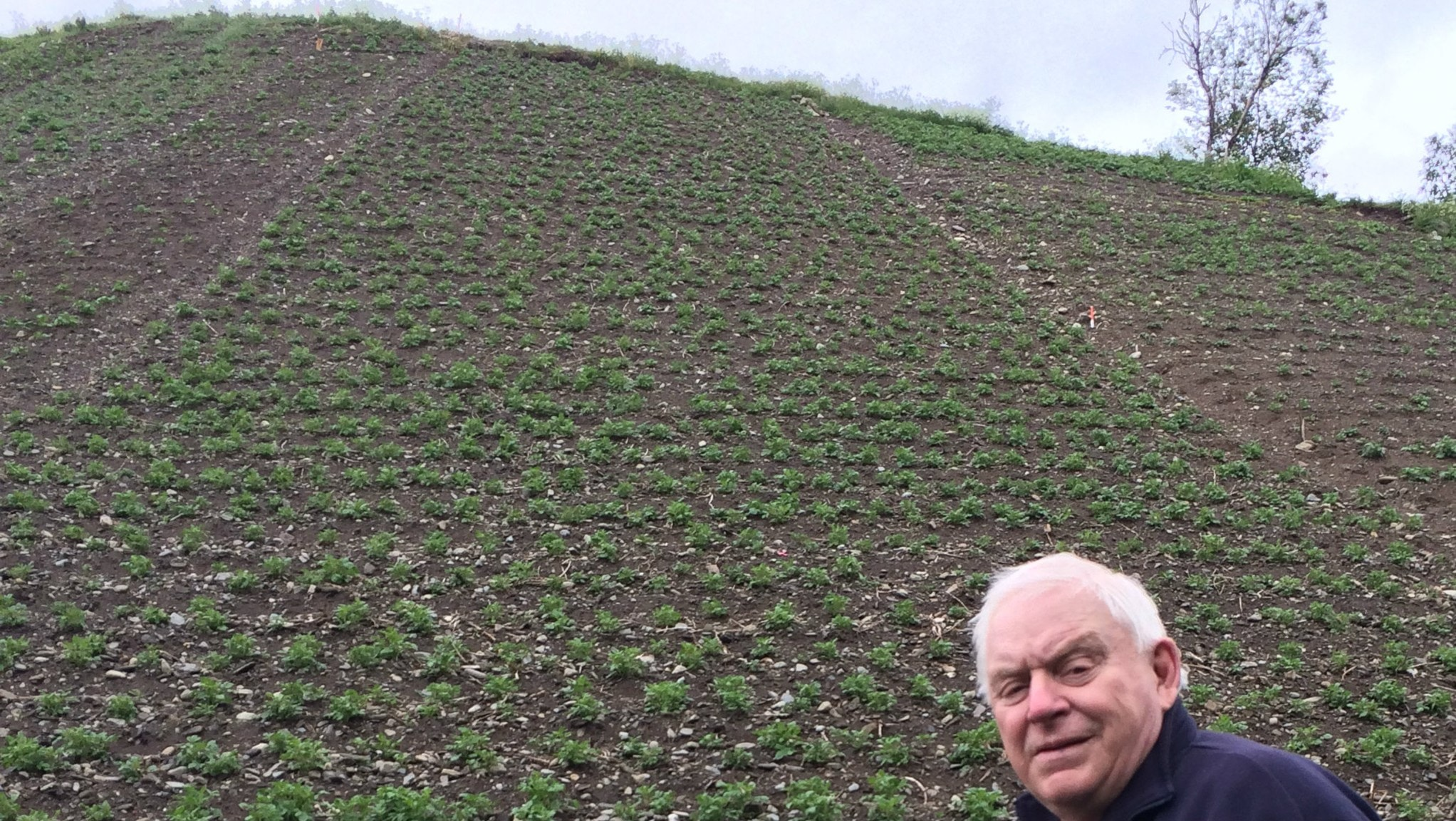 Han odlar potatis vid fjället