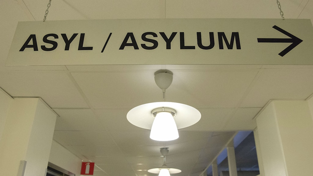 Fewer people than expected will apply for asylum in Sweden in 2015. Photo:  Maja Suslin / TT