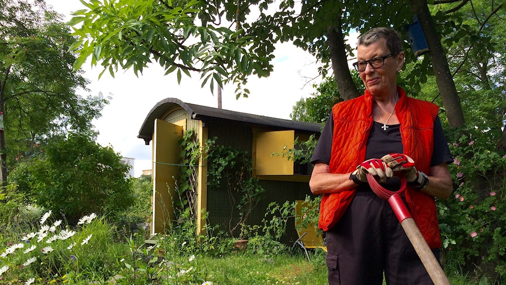 Britt-Marie Daxberg, with pitchfork in hand, enjoying the summer in her allotment on Långholmen, an island in Stockholm. Photo: Brett Ascarelli / Radio Sweden