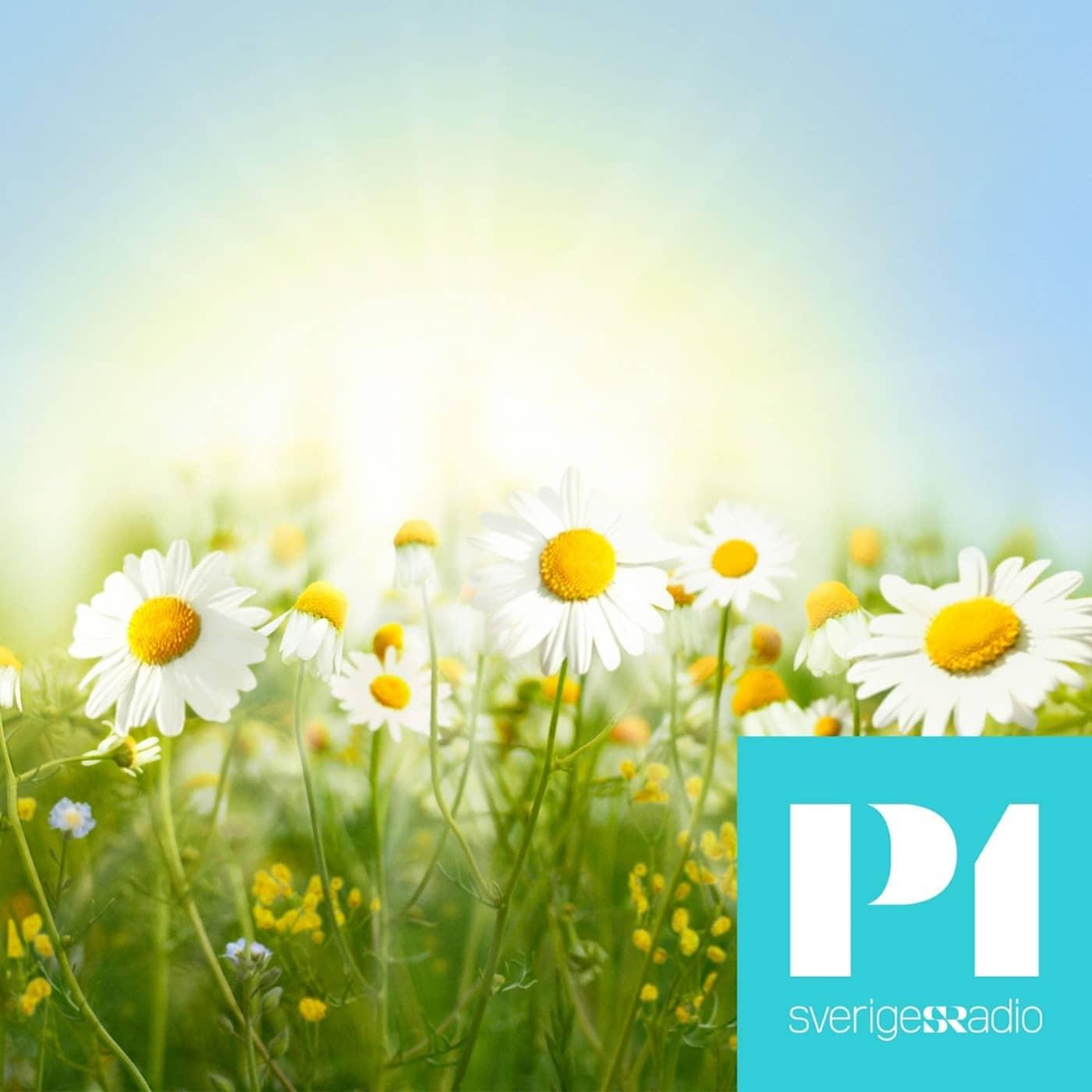 Sommar och Vinter i P1
