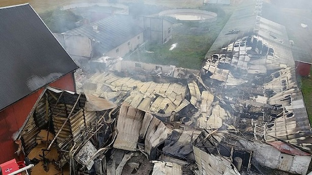 أدى الحريق إلى دمار حظيرة الخنازير بشكل كلي. صورة: فرق الإنقاذ في سيفلي.