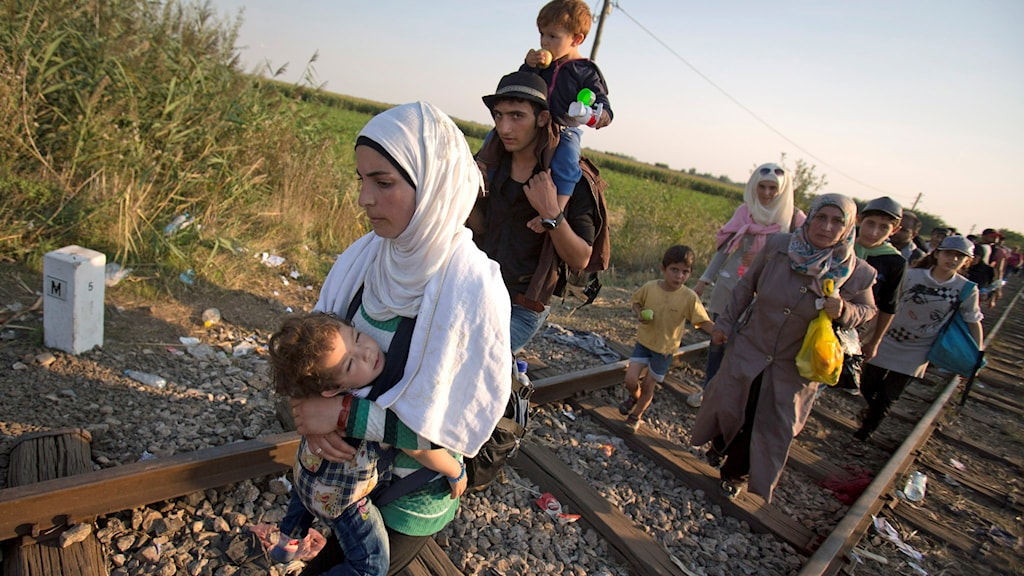 Refugees walk on the railway tracks to cross from Serbia, near Roszke, southern Hungary. Round the clock, thousands of refugees cross daily along the approximately 110-mile (175-kilometer) border with non-EU member Serbia to the south. (AP Photo/Darko Bandic).