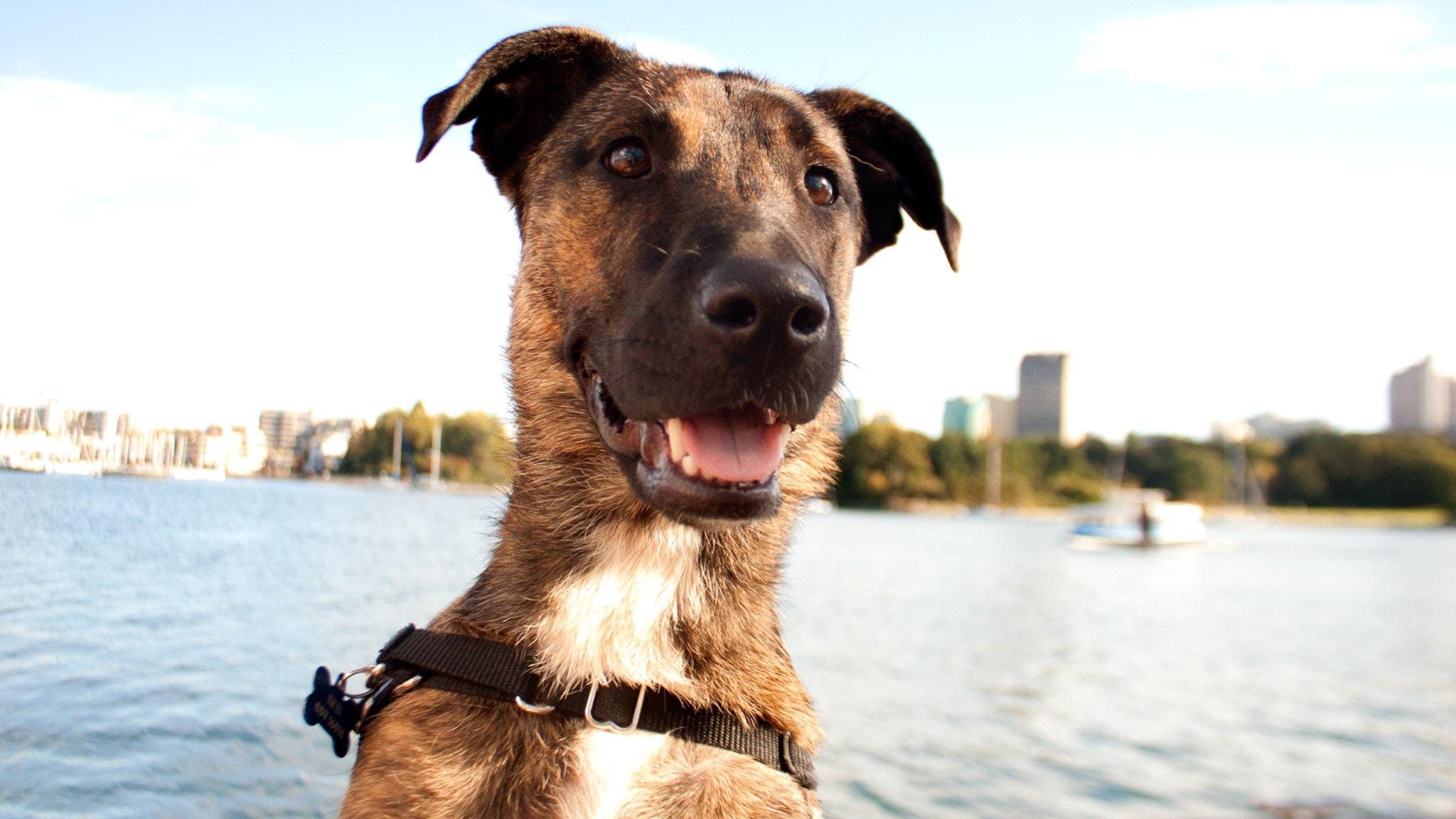 Musikens menageri, del 6: Kamphundar och andra underdogs
