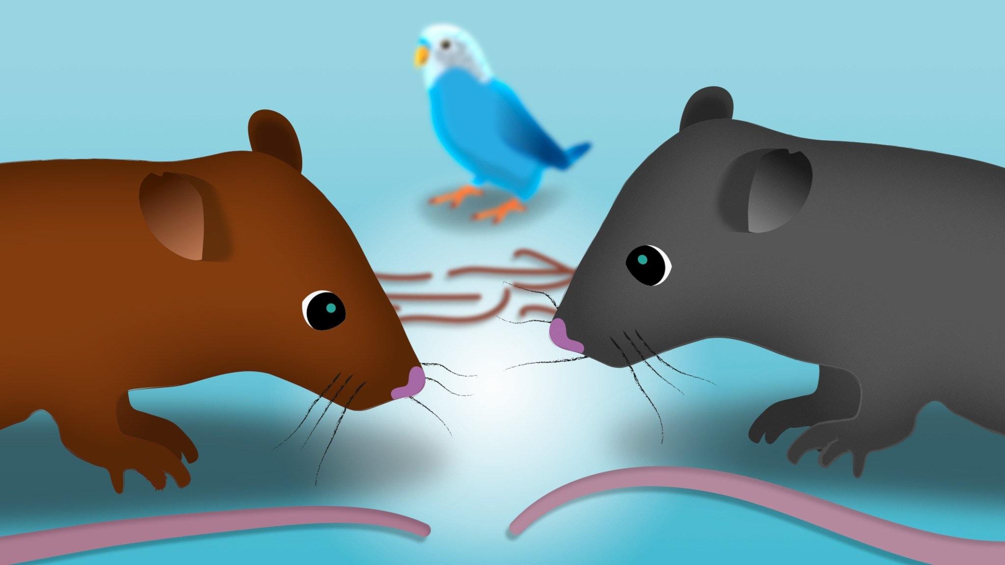 Nina och det stora tråkiga, del 3: Nina och råttbebisarna