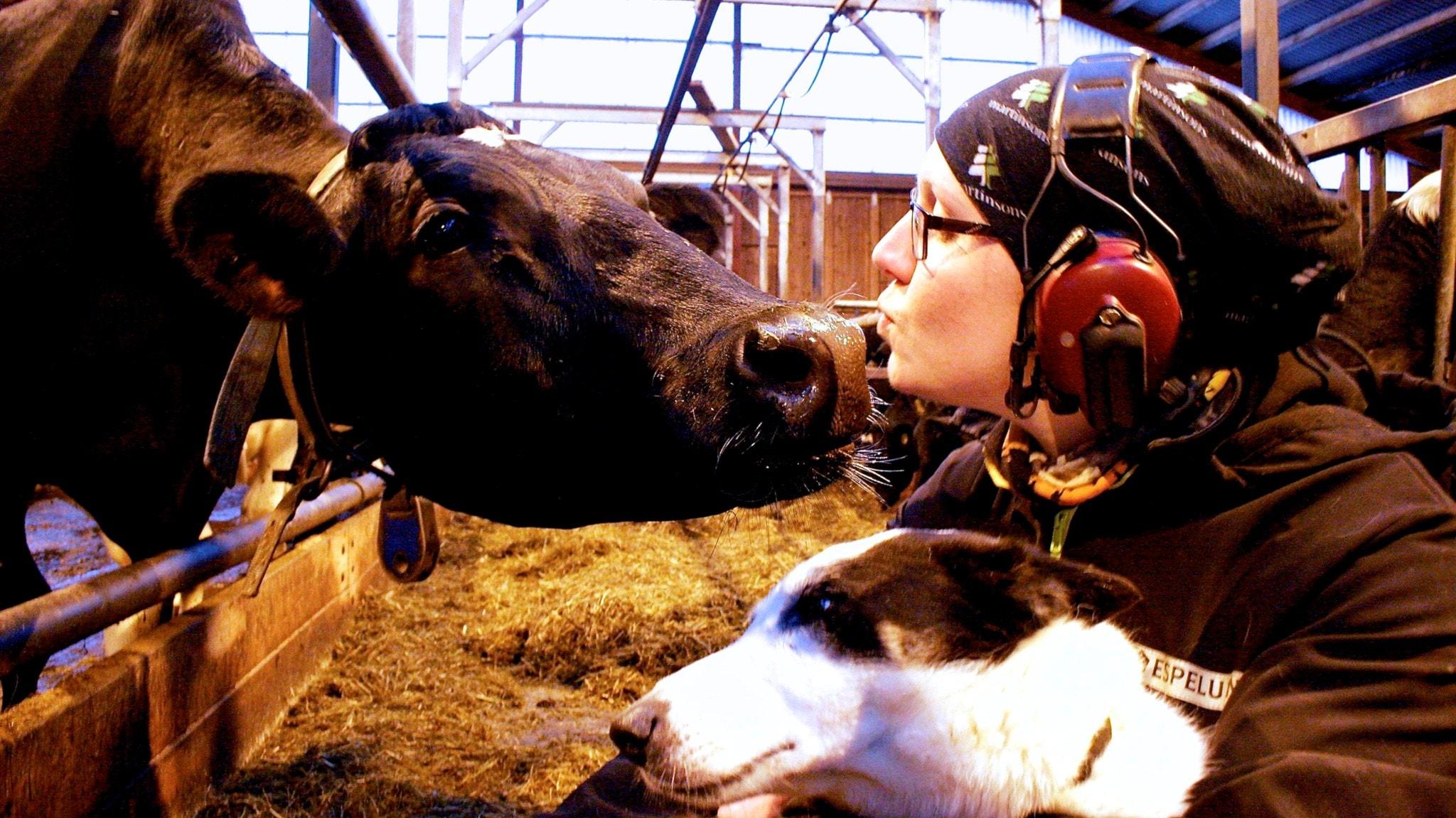 Mjölkbonden Malin: