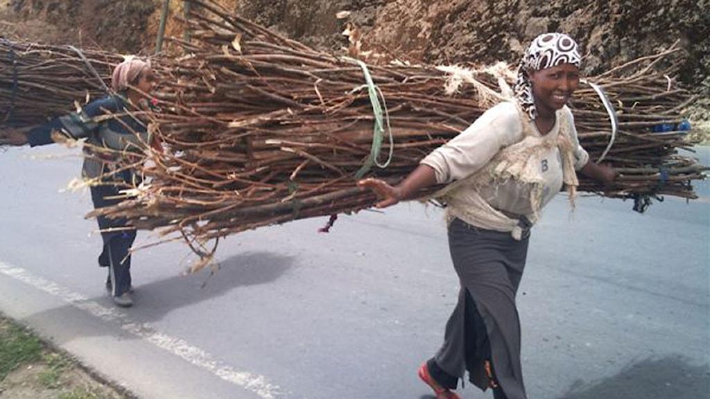 Etiopiska vedförsäljerskor bär tunga lass på ryggen.