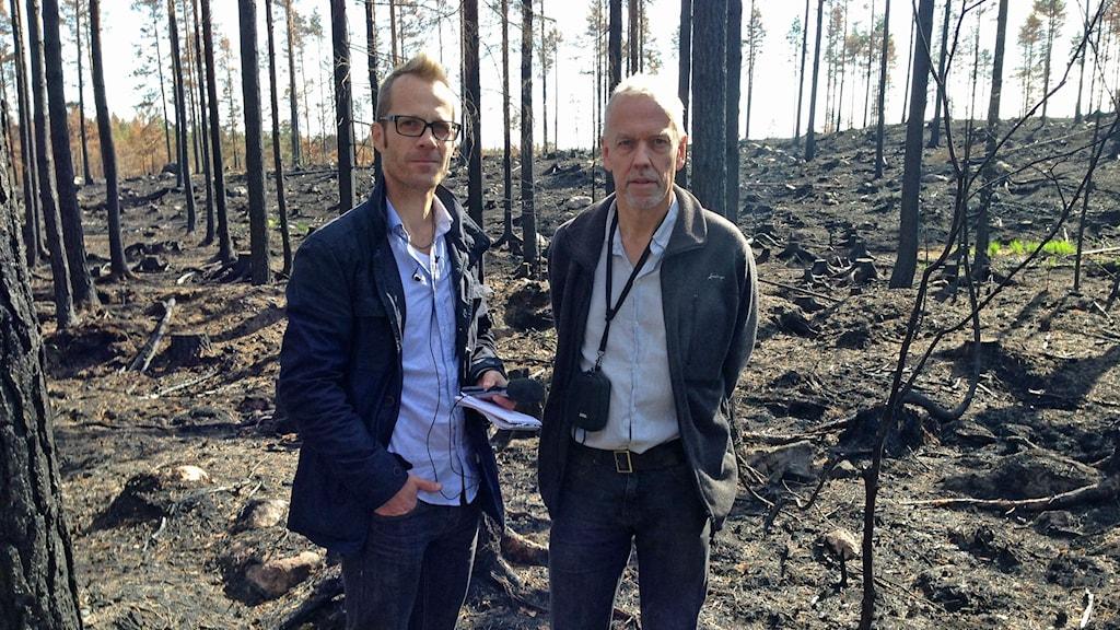Lars Broström SR och Anders Granström SLU i den brunna skogen i Salatrakten. Foto: Leif Sandahl Sveriges Radio