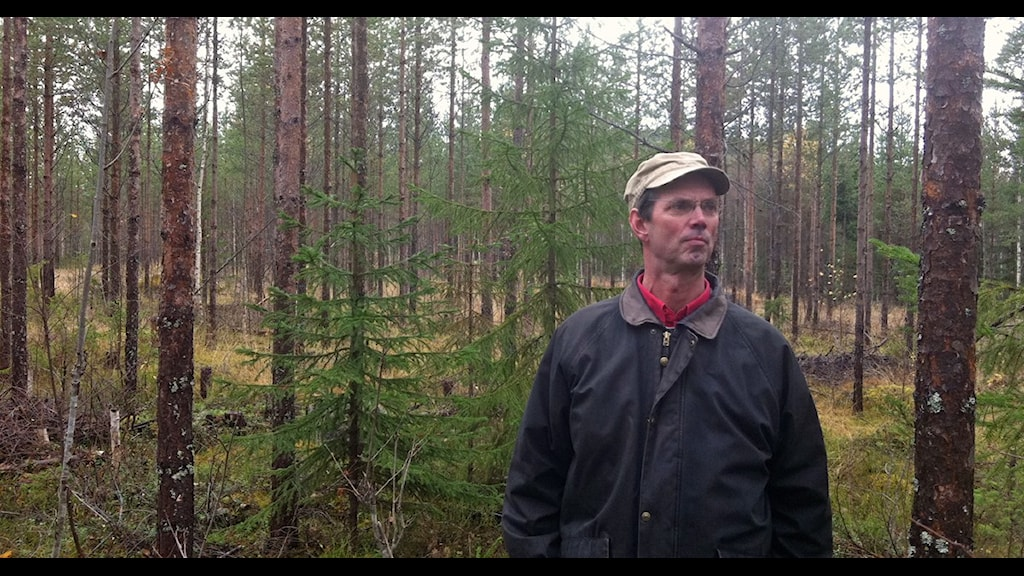 Svarte Swartling i sin framtidsskog Foto: Ola Hemström