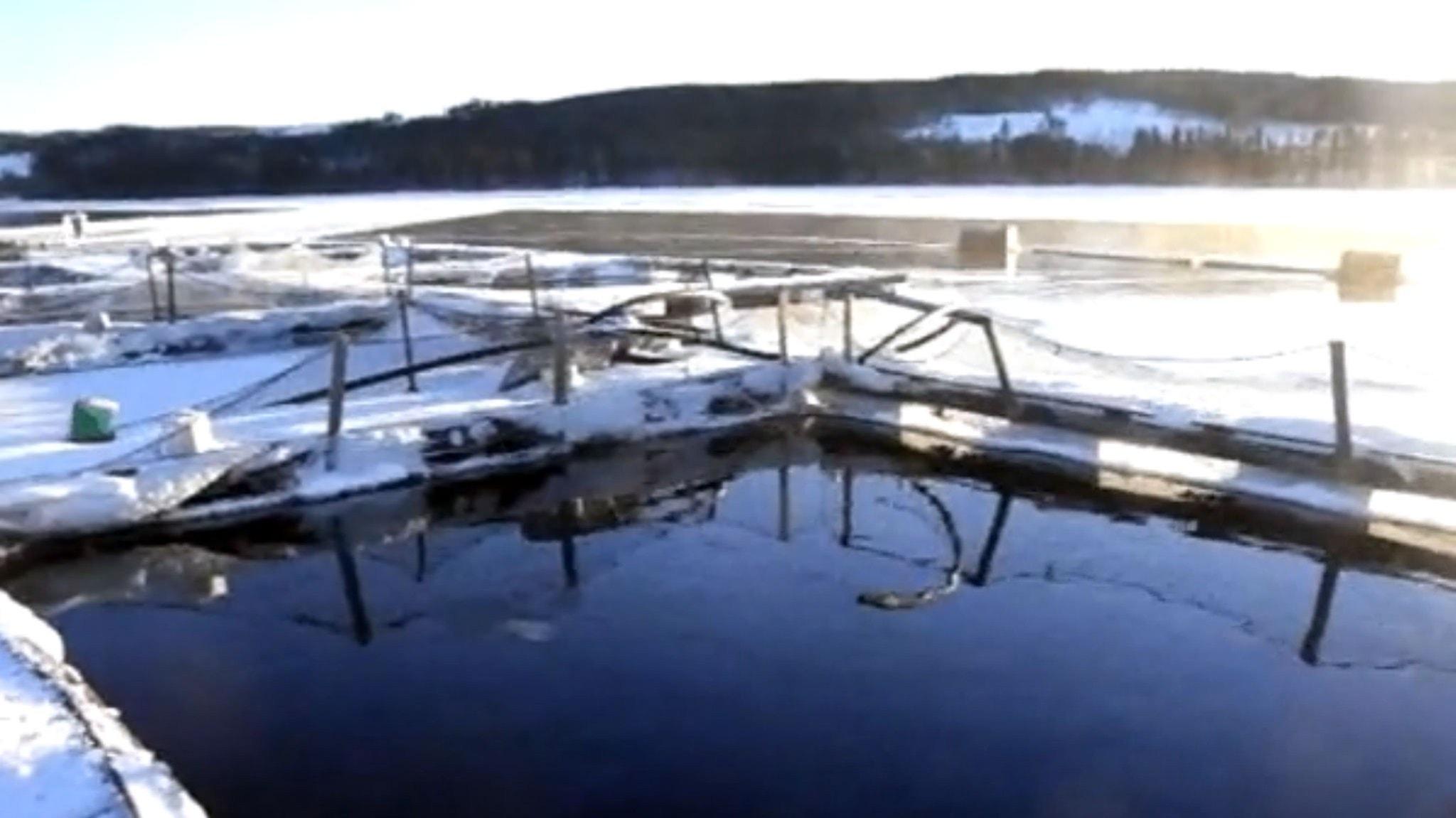 Svensk fisk på tallriken