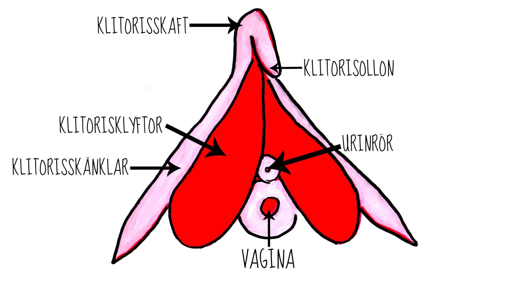 Allt du behöver kunna om klitoris!