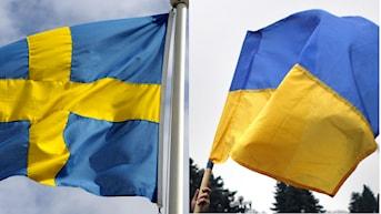 Montage med svenska flaggan och den ukrainska flaggan. Foto: Janerik Henriksson/TT, AP Photo/ Marko Drobnjakovic/TT. Montage: Sveriges Radio.