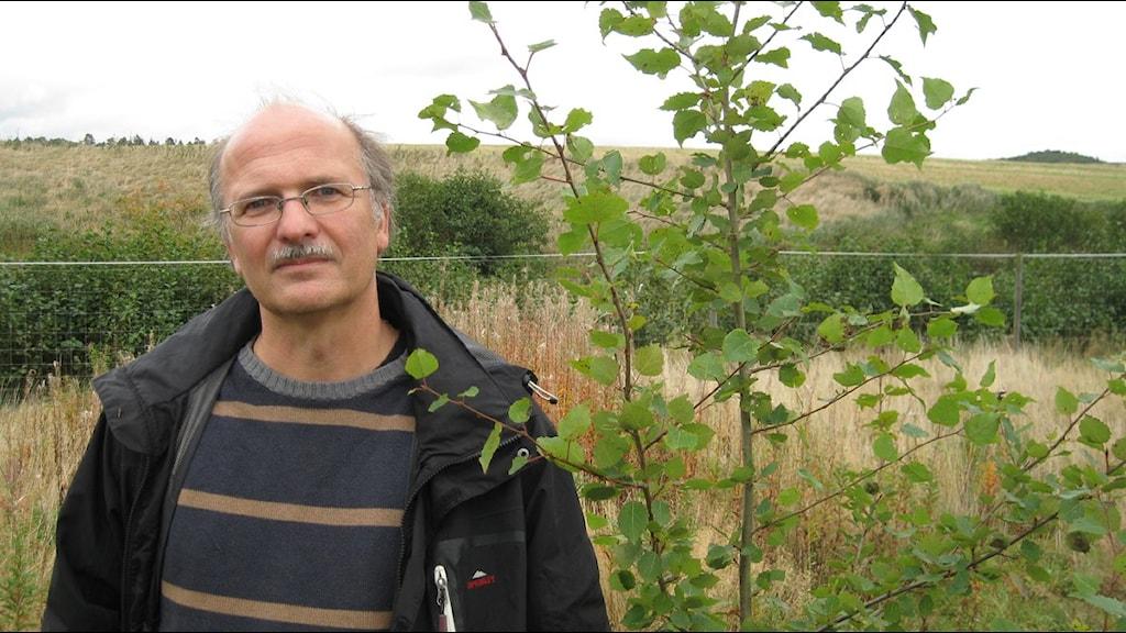 Professor Stefan Jansson vid Umeå Universitet intill genändrad asp vid fältförsök i Halmstad. Foto: Johan Bergendorff / Sveriges Radio