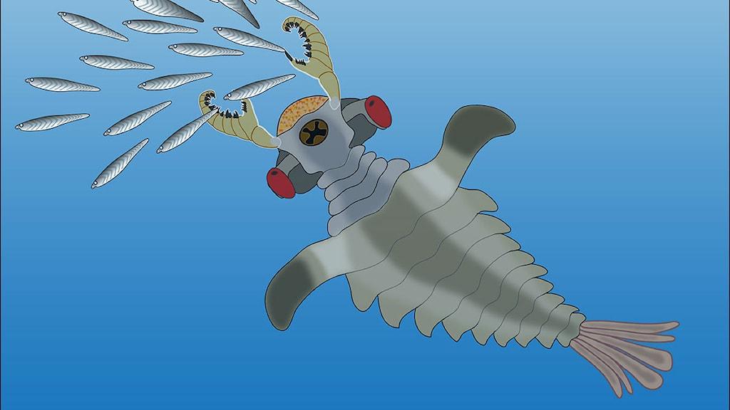 Teckning över kräftliknande rovdjur