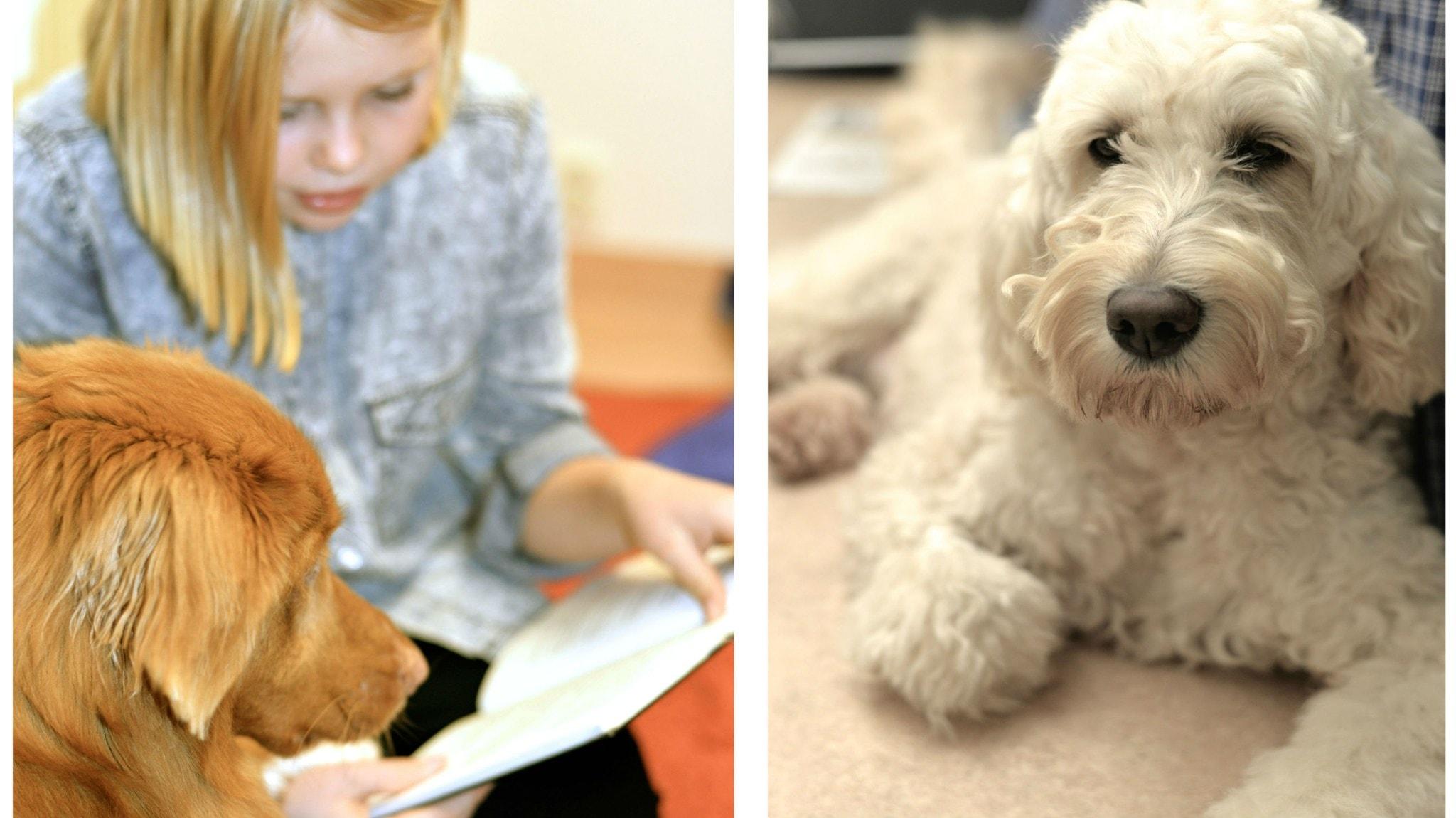Hundar i barnens tjänst