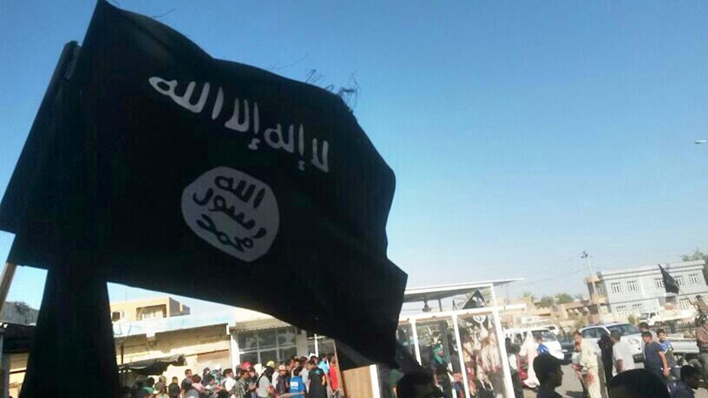Isis flagga i irakiska Fallujah. Foto: TT