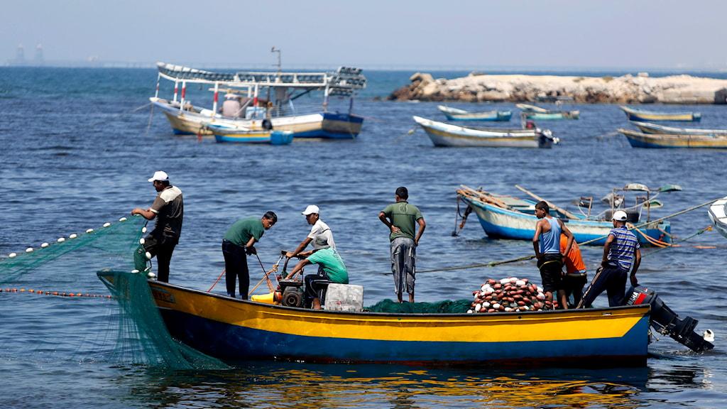 Fiskare i Gaza. Foto: Hatam Moussa/TT
