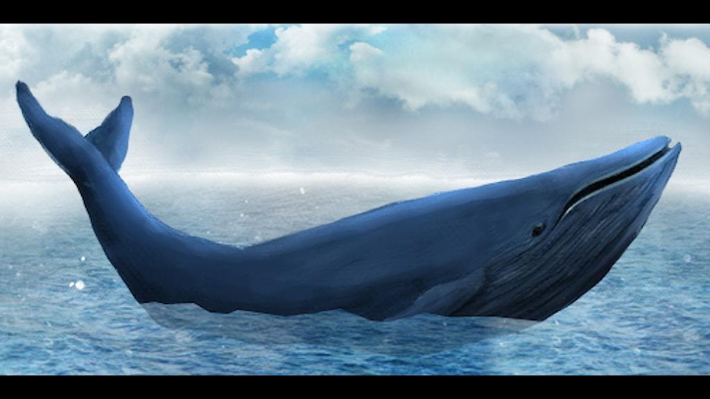 världens största djur