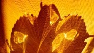 Minnesmusik - hyllningar och gråt - av Pergolesi, Bach, Vivaldi, Scarlatti och Veneziano