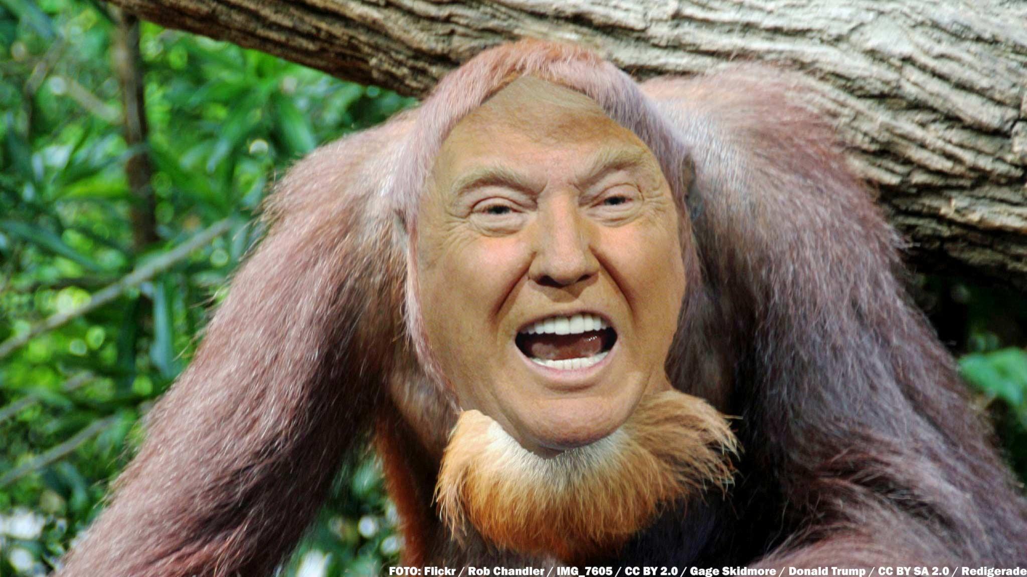 #24. Donald Trump