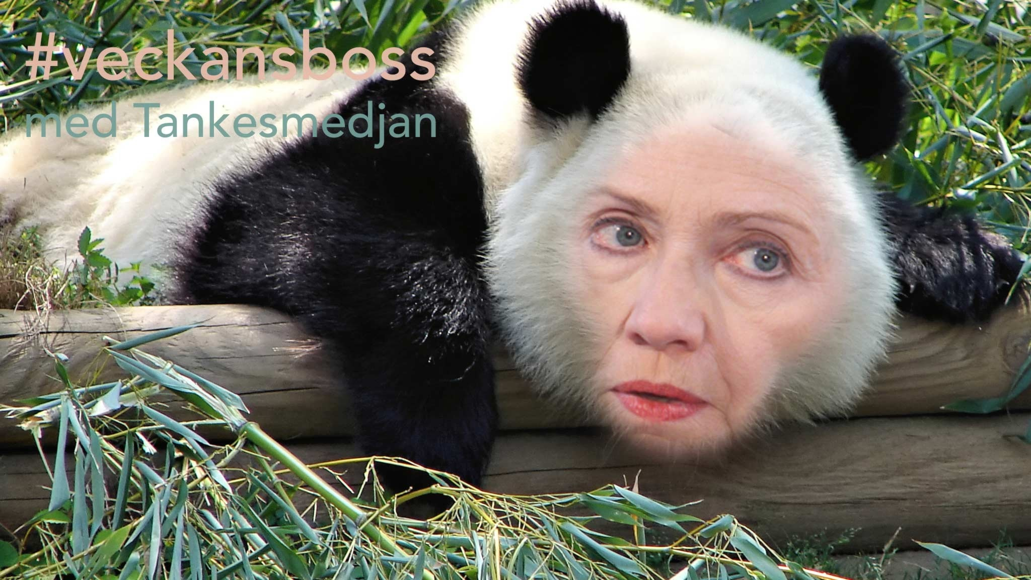 #48. Hillary Clinton - Den stabila pandan klår Fridolin i präktighet