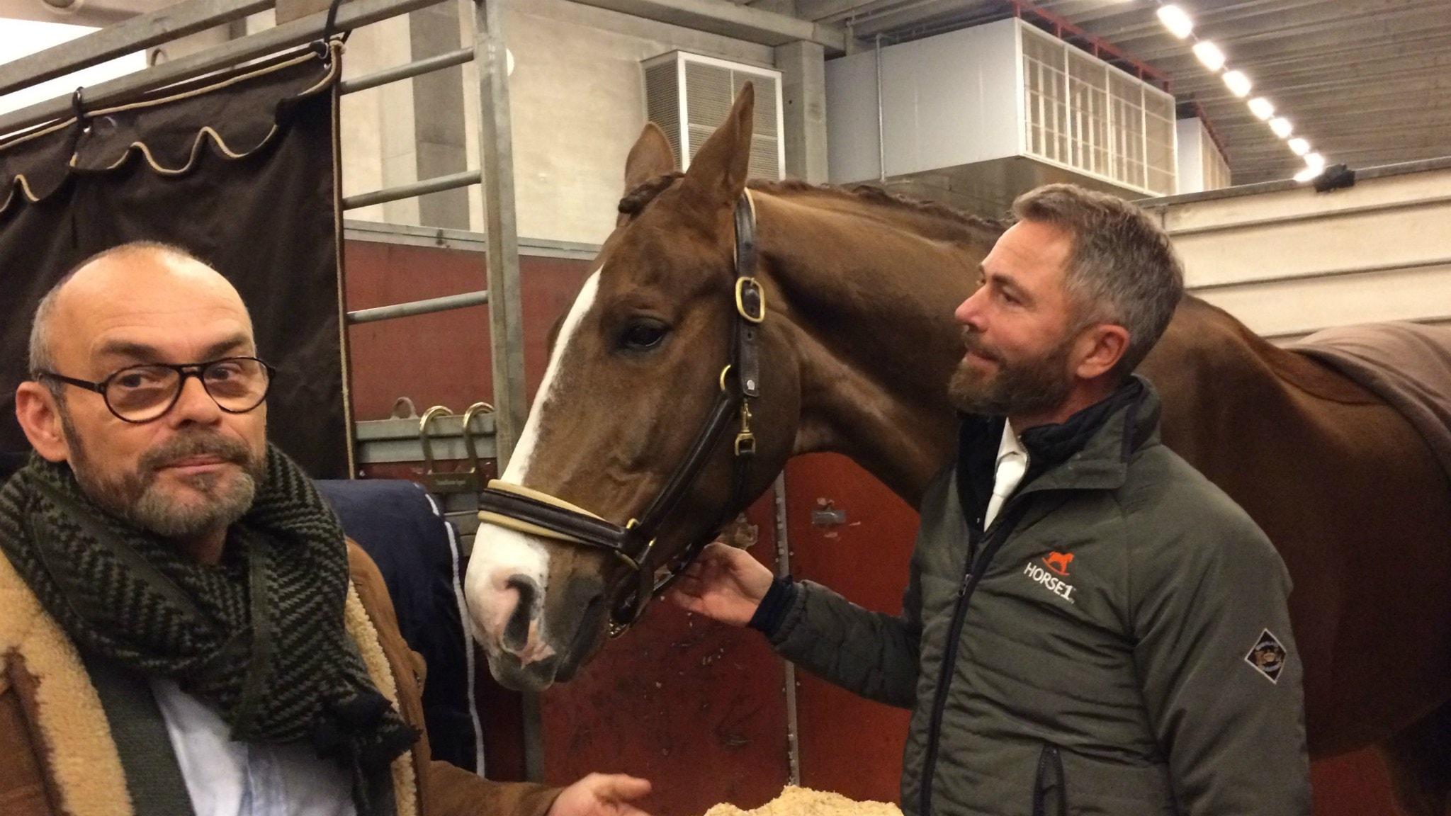 Människan och hästen