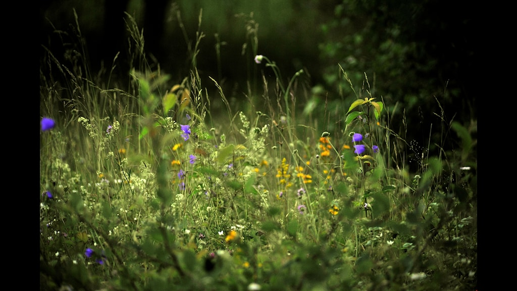 Skrota gräsklipparen - fram med lien
