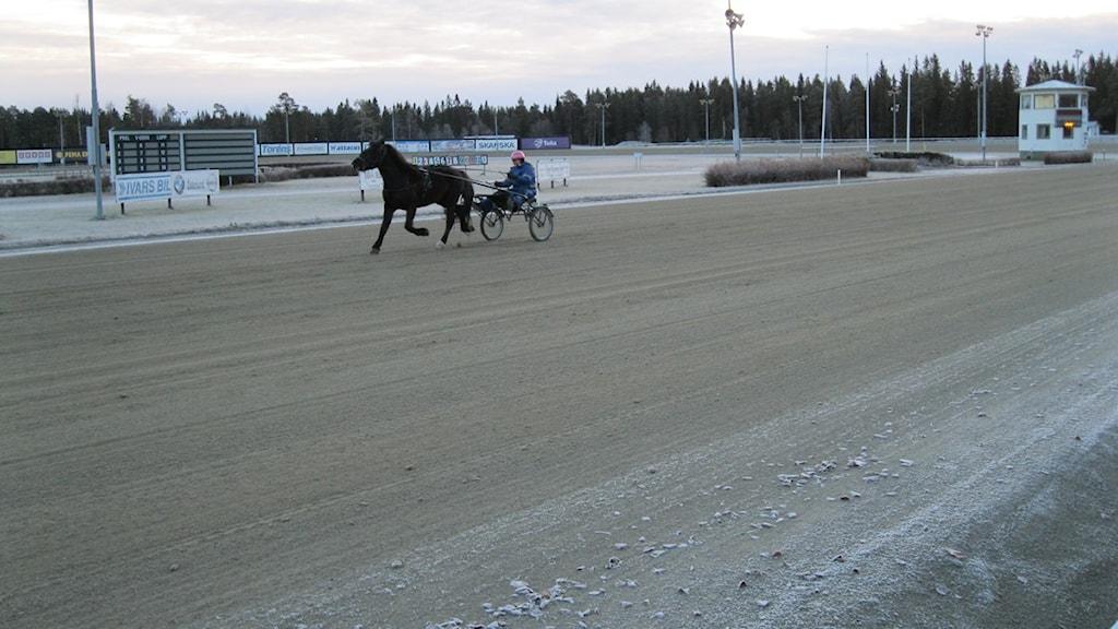 Östersundstravet påverkas av hur många som satsar på ATG:s spel. Foto: Viktor Åsberg/SR