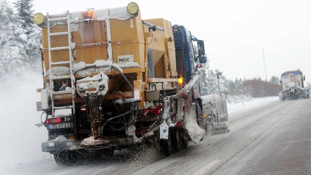 Plogning och saltning. Foto: Johan Nilsson/Scanpix