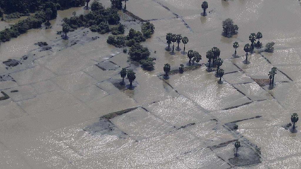 Översvämning Sri Lanka. Foto: Eranga Jayawardena/Scanpix.