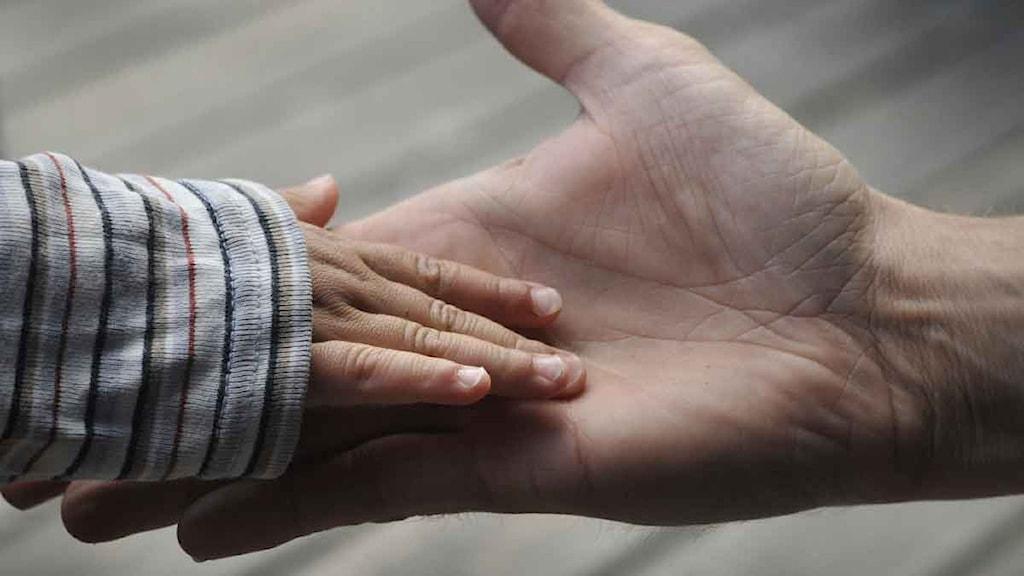 Barnhand i en vuxenhand. Foto: Hasse Holmberg/Scanpix.