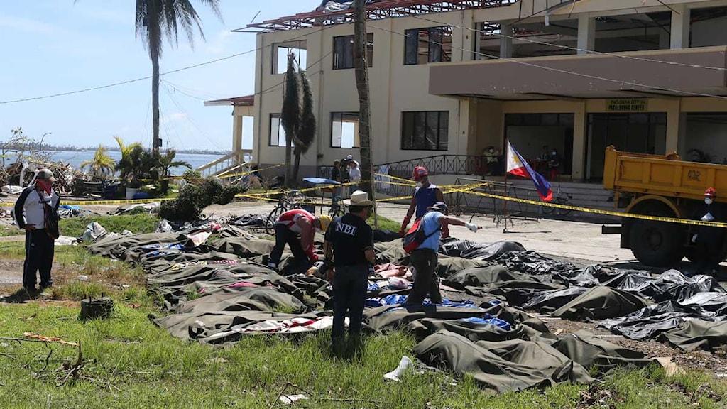 De döda läggs ut på ett fält i centrala Tacloban. Foto: Nils Horner/SR