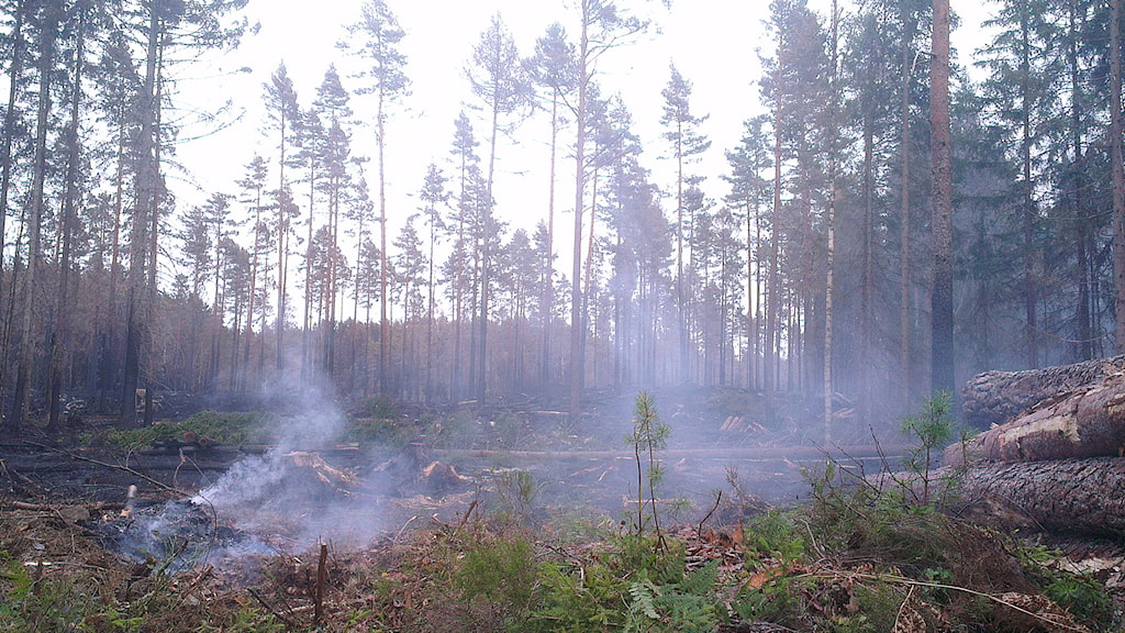 Photos from a Swedish Radio News reporter inside the fire zone. Photo: Filip Stiller/Sveriges Radio.