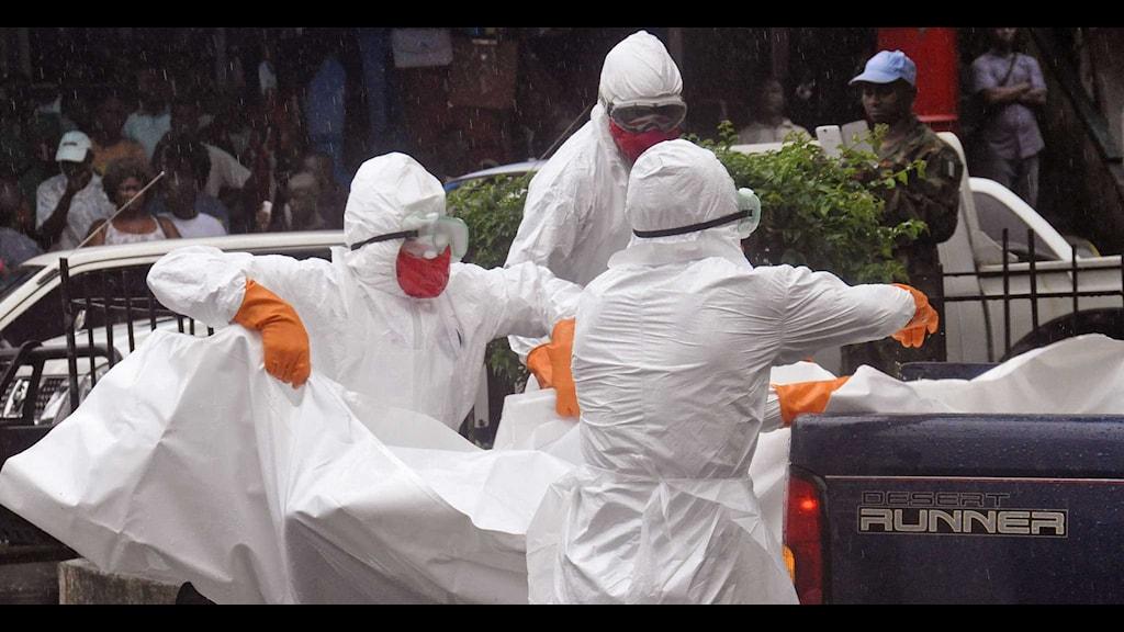 Vårdpersonal i skyddsdräkter lastar kroppen efter en misstänkt ebolapatient på ett bilflak i Monrovia i Liberia. Foto: Abbas Dulleh/TT.